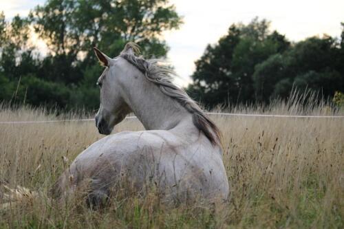 horse-905534 960 720